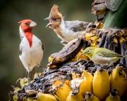 Banana Birds-5