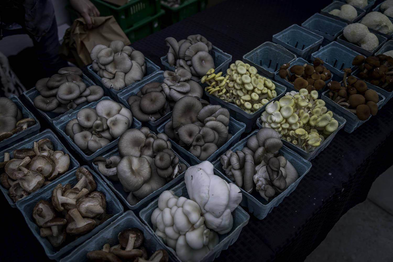 Farmer's Market-2