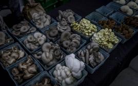 Greenland Farmer's Market