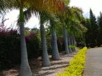 19-Enchanted-Gardens