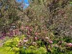 5-New-Zealand-Tea-Tree
