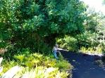 6-Enchanted-Gardens