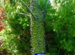 7-Silk-Tree