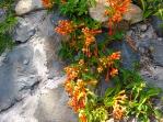 8-Enchanted-Gardens