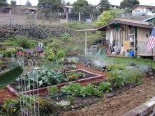 1_janes-garden-shed-9-16