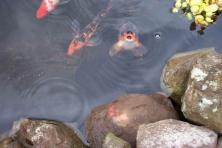 Hifromfish