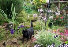 garden-ticky