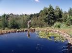 Pond-not-Pond