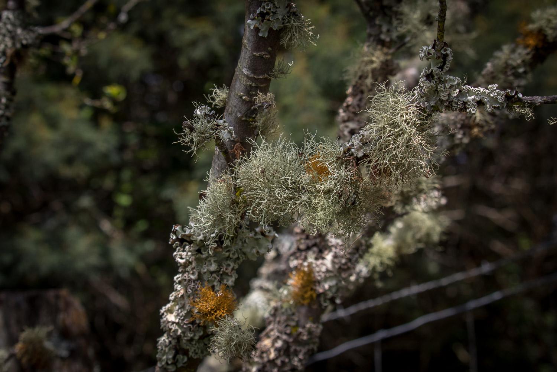 puu-mahoe-4