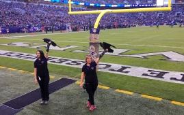 ravens-steelers16