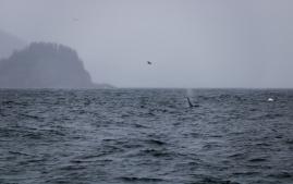 Seward-Fjords-83