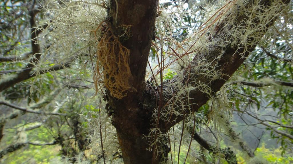 Lichens Lichens everywhere