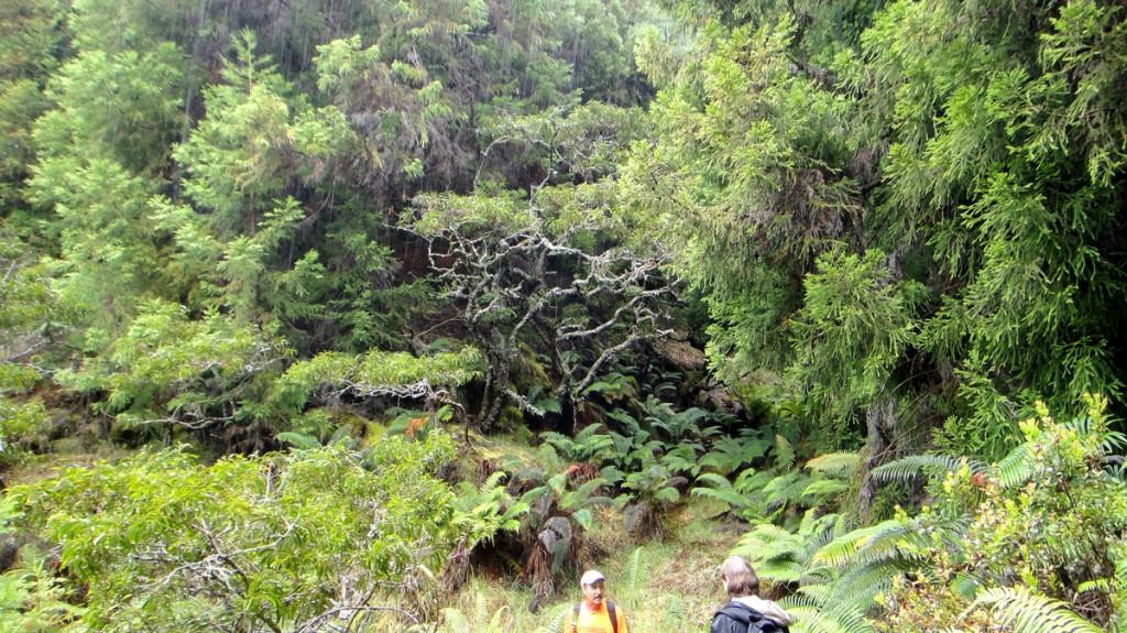 A walk in Waikamoi in the rain
