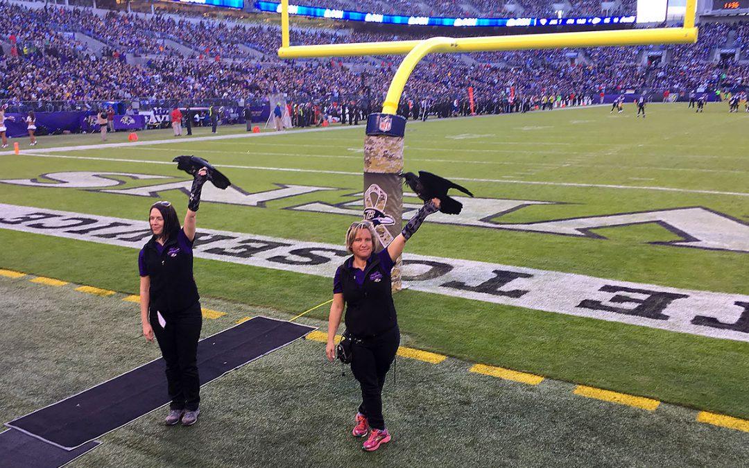 Ravens / Steelers 11/6/16